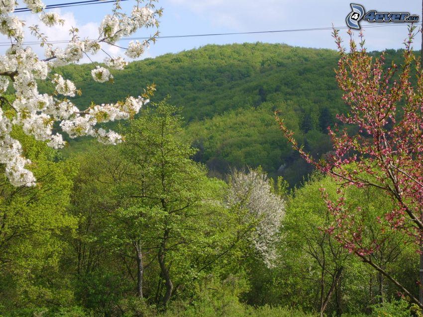 paysage, printemps, nature, panorama