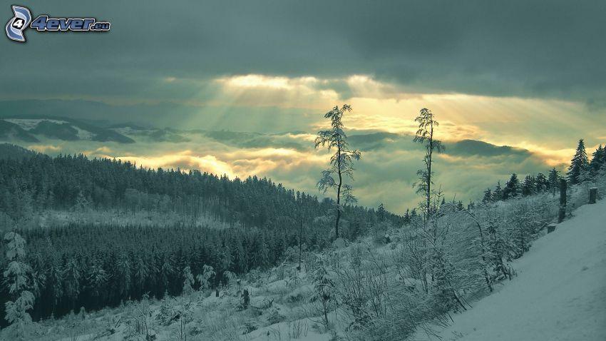 paysage d'hiver, neige, nuages, arbres enneigés, rayons du soleil