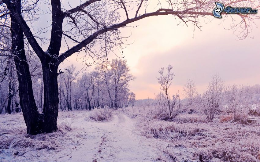 paysage enneigé, soirée