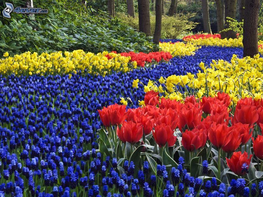 tulipes, Fleurs de printemps