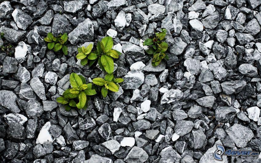 pierres, des végétaux