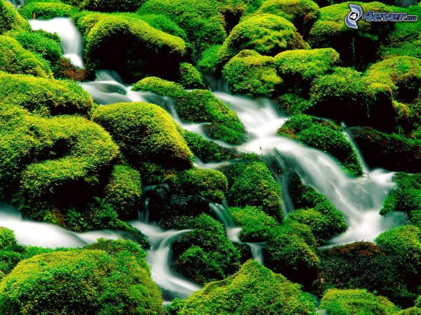 pierres, ruisseau, mousse, vert
