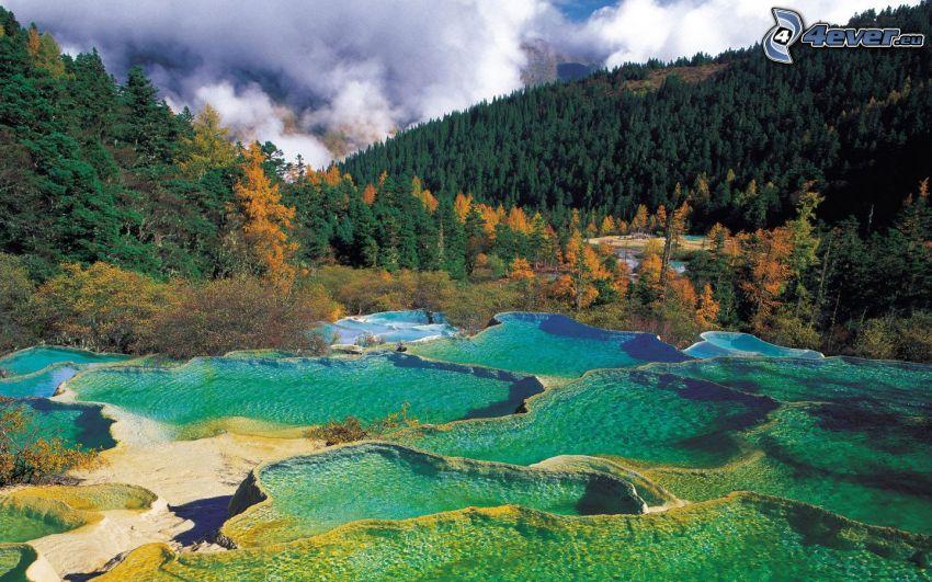 piscines en terrasses, forêt, collines
