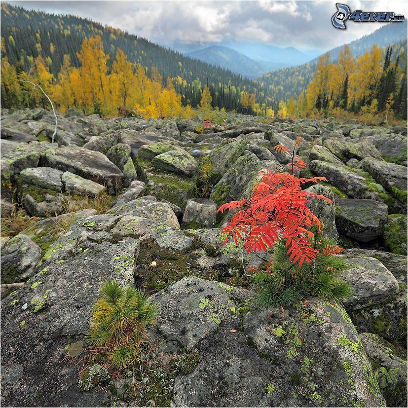 plante, rochers, arbres jaunes, collines