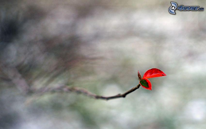 brindille, feuille rouge en automne
