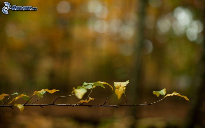 brindille, les feuilles d'automne