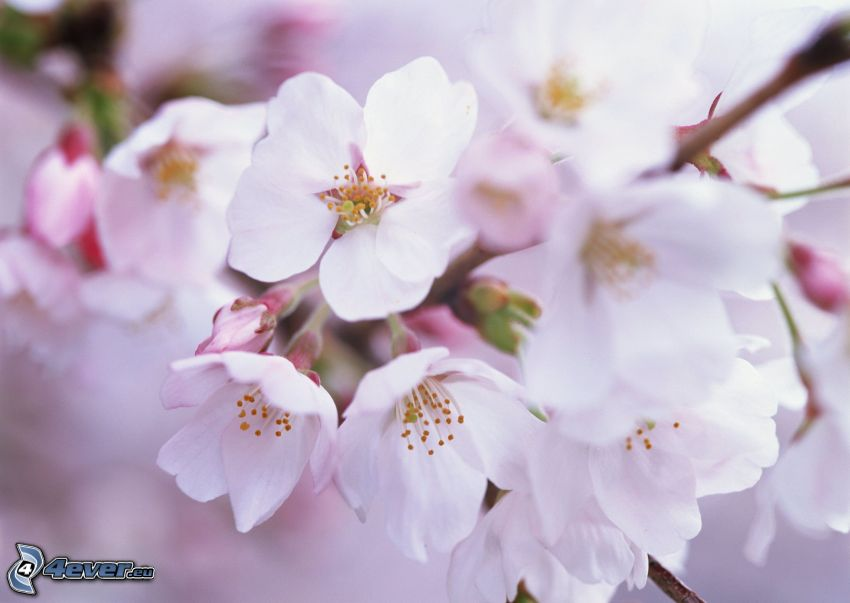 brindille en fleur