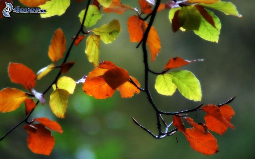 feuilles colorées, branches