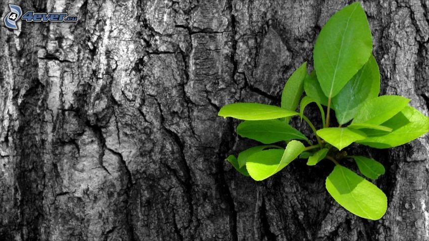 feuilles vertes, écorce d'arbre