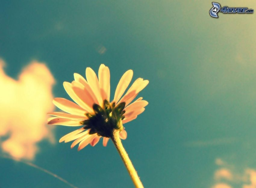 fleur, ciel