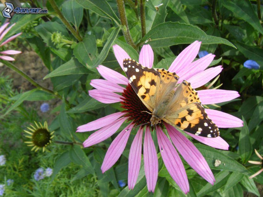 fleur, papillon