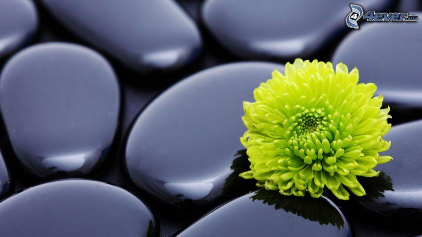 fleur, pierres plates