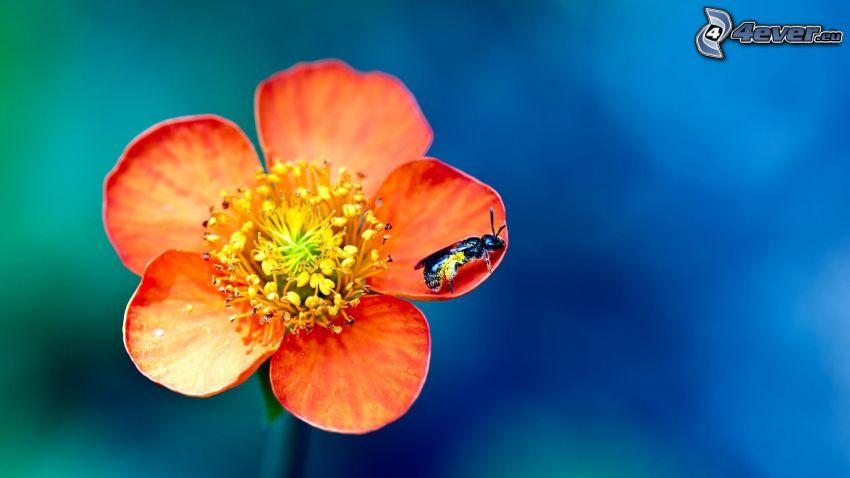 fleur orange, mouche