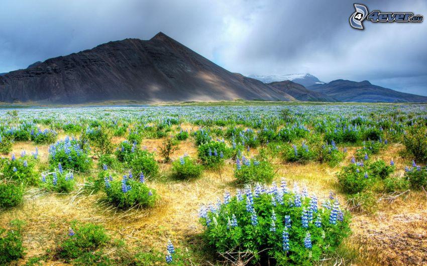 fleurs bleues, collines
