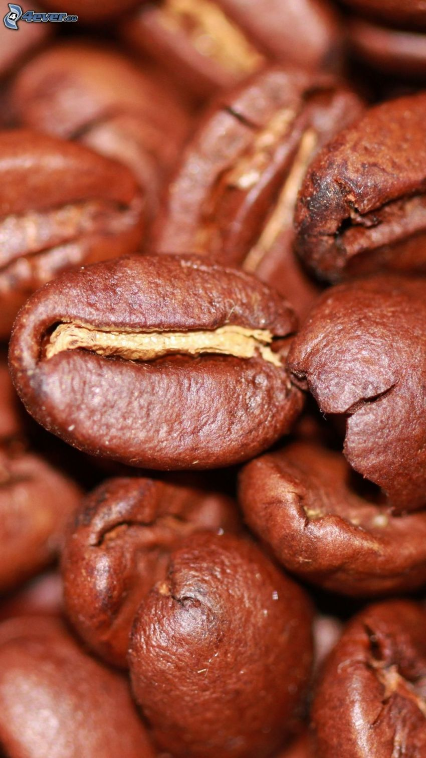 café en grains, macro