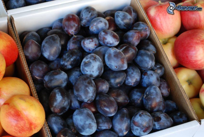 pruneaux, nectarines, pommes