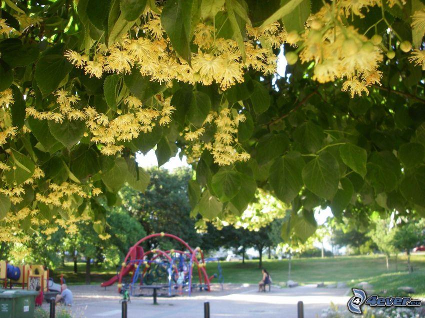 le tilleul, portique, parc