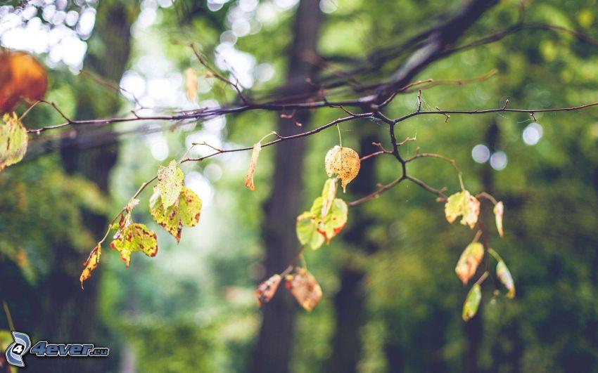 les feuilles d'automne, branches