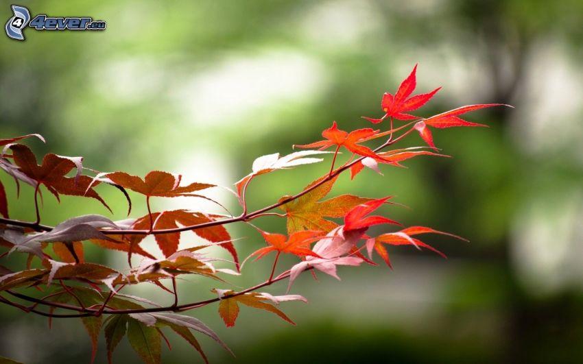 les feuilles d'automne, brindille