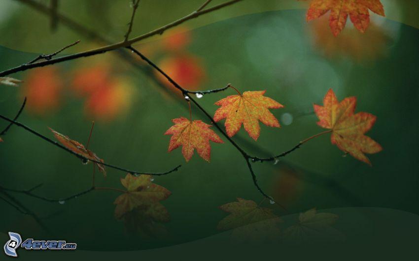 les feuilles d'automne, feuilles sur une branche