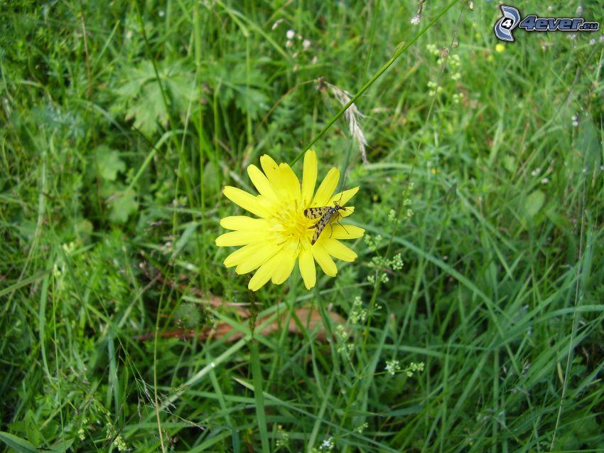 moustique, fleur, l'herbe, prairie