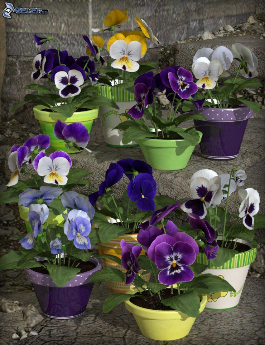 pensées, fleurs violettes, fleurs blanches, fleurs jaunes