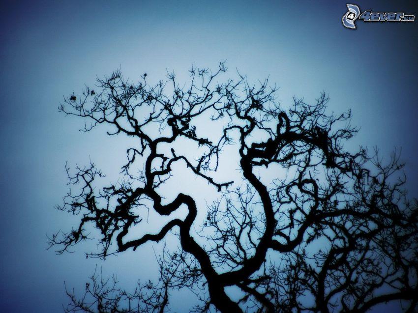 silhouette de l'arbre
