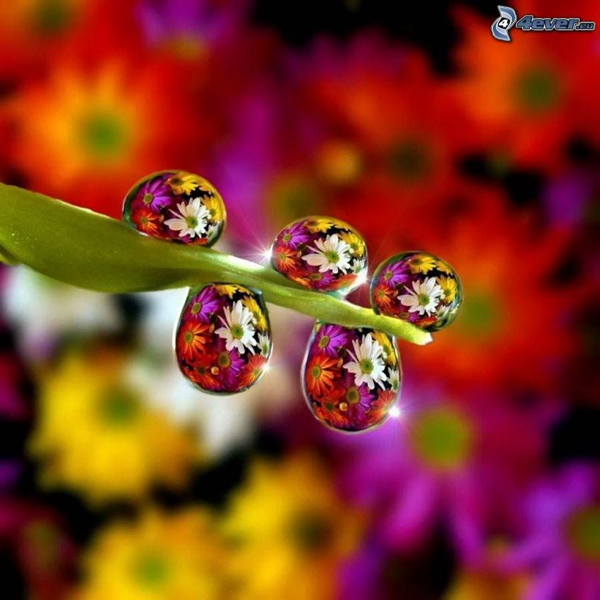 tige, gouttes d'eau, fleurs colorées, Photoshop