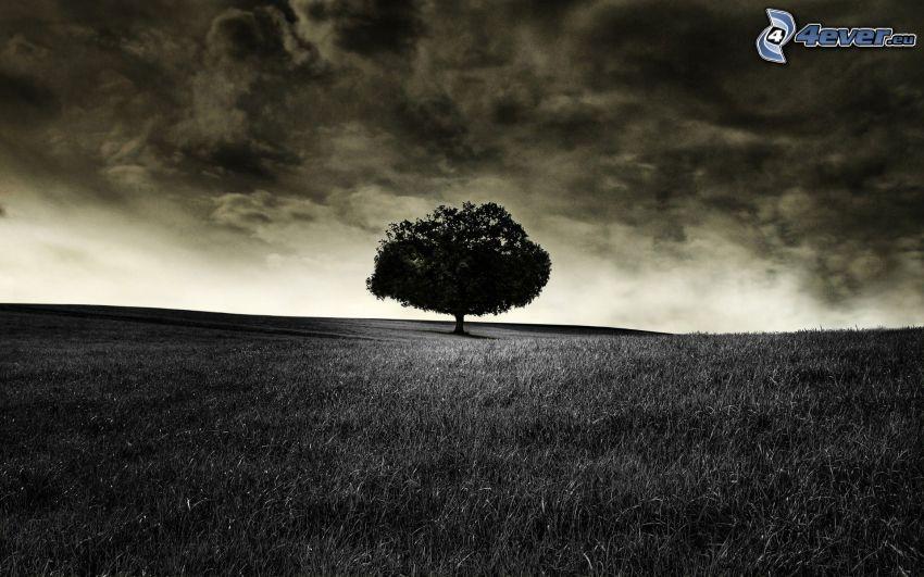 prairie, arbre solitaire, nuages, noir et blanc