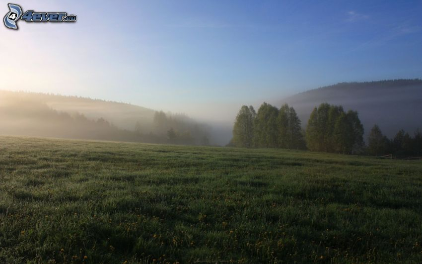 prairie, forêt, brouillard au sol