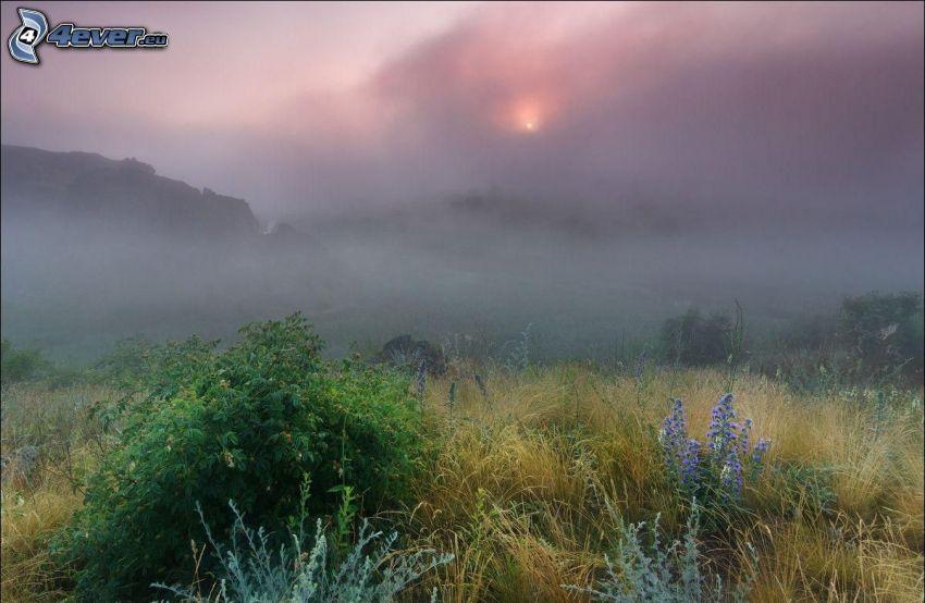 prairie, l'herbe haute, fleurs bleues, brouillard au sol