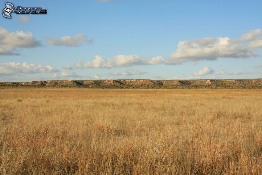 prairie, montagne, nuages