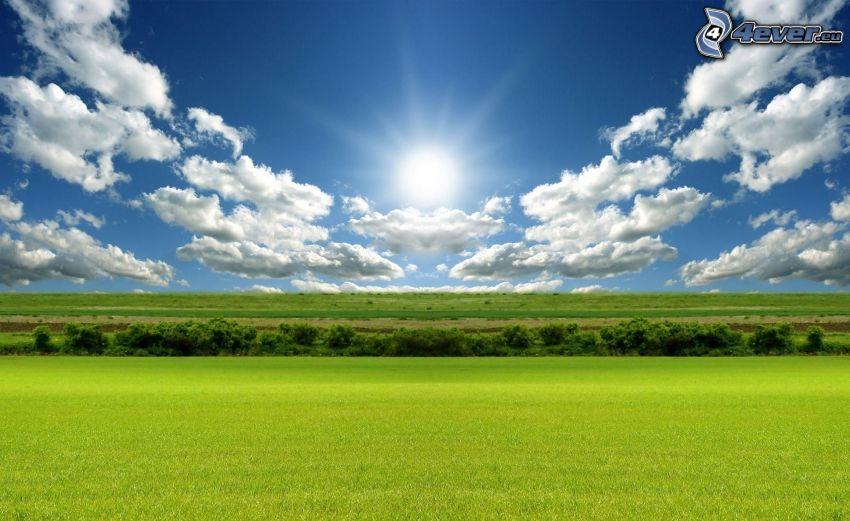 prairie verte, soleil, nuages