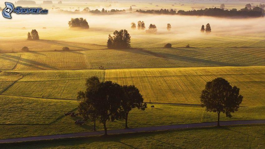 prairies, arbres, route, brouillard au sol