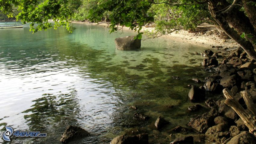 rivière, pierres, arbres