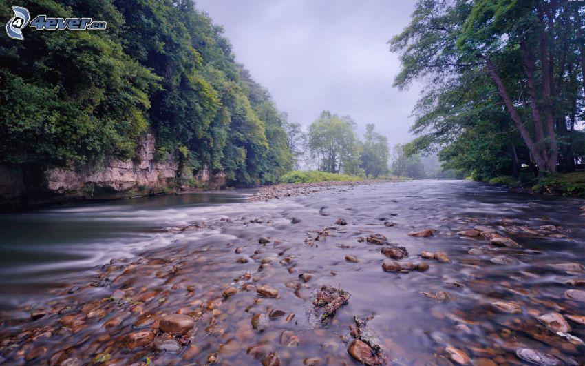 rivière, pierres, forêt