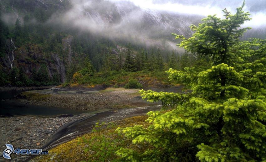ruisseau, arbre, brouillard, montagne rocheuse