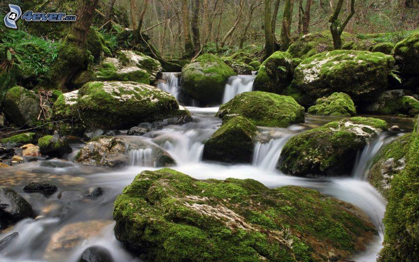 ruisseau dans une forêt, pierres, mousse