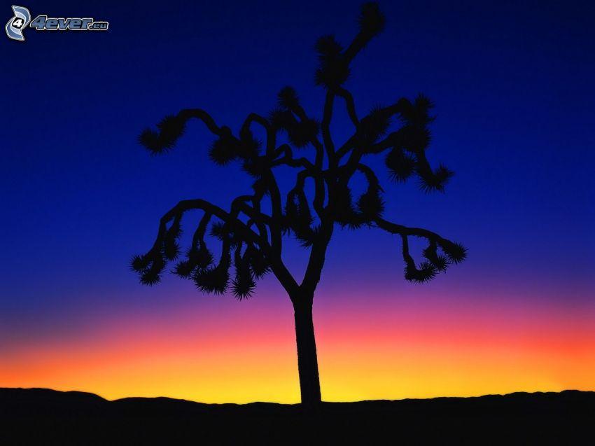 silhouette de l'arbre, ciel du soir