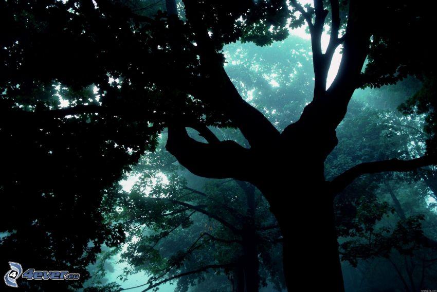 silhouette de l'arbre, forêt sombre