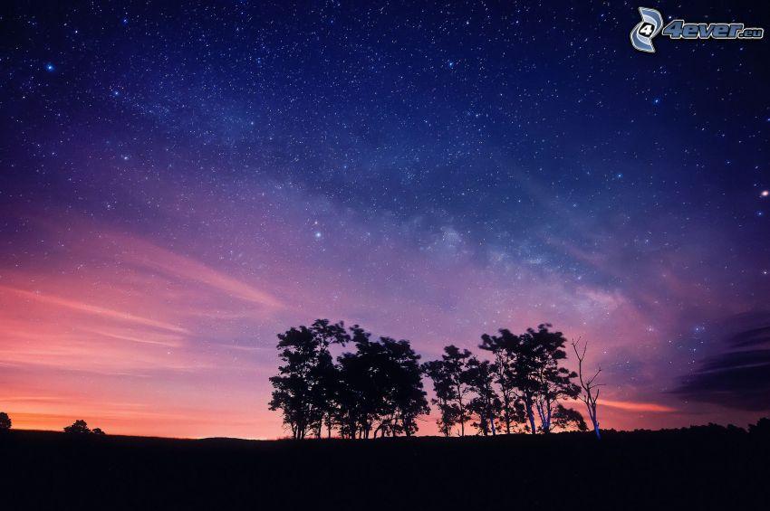silhouettes d'arbres, ciel étoilé