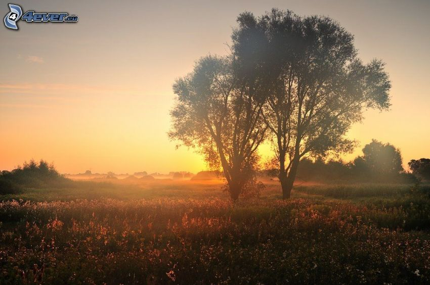 silhouettes d'arbres, prairie, coucher du soleil