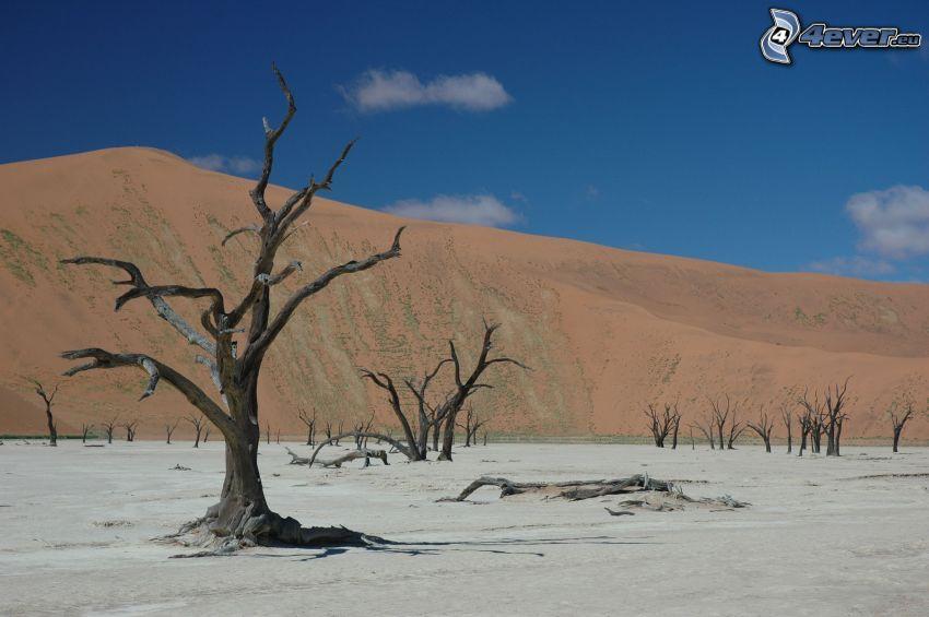 Sossusvlei, arbres secs, dune de sable