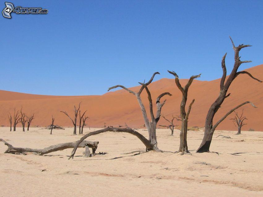 Sossusvlei, dune de sable, arbres secs