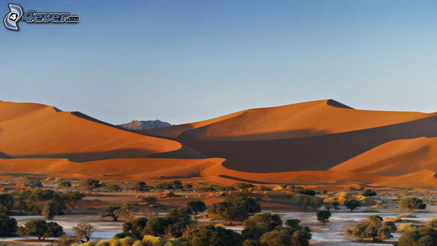 Sossusvlei, dunes de sable, arbres