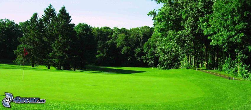 terrain de golf, forêt, pelouse