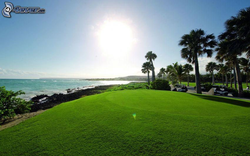 terrain de golf, mer, palmiers, soleil