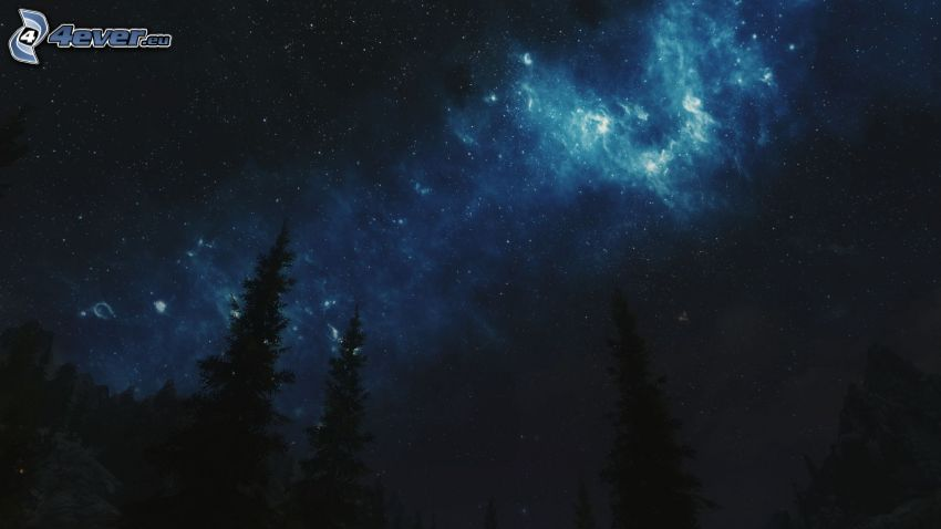 ciel de la nuit, silhouettes d'arbres, étoiles
