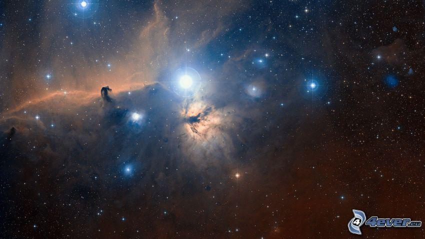 Nébuleuse de la Tête de Cheval, étoiles