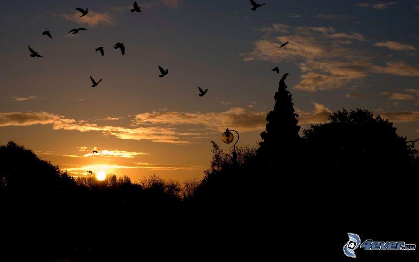 vol d'oiseaux, coucher du soleil, silhouettes